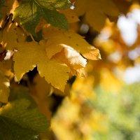 Осень :: Johann Lorenz