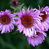 # Цветы :: Олеся
