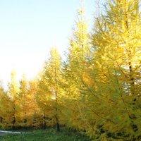 Осень :: Олька Фуллер