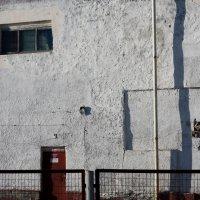 стена :: Екатерина Крюкова