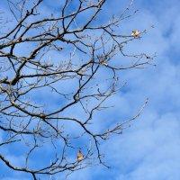 Осень, листья улетели... :: Asya Piskunova