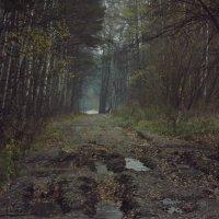 утренний лес :: Ирина Шершнева