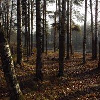 в лесу :: Ирина Шершнева