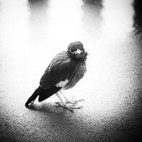 Тайская птица :: Elena Kuznetsova