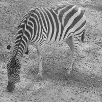 Одесский зоопарк :: Ирина Соловьева