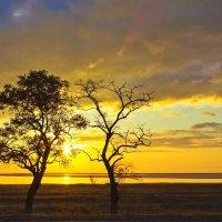 Утреннее пробуждение солнца. :: Svetlana Sneg