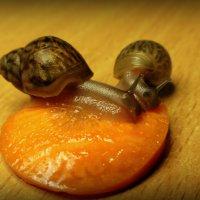 Вкусная морковь) :: Евгеша Сафронова