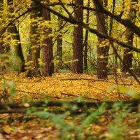 Природные рамки :: Рома Красюк