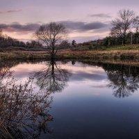 Гладь старинного пруда :: Валерий Шейкин