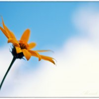 Цветок и небо :: Александр Горбачев