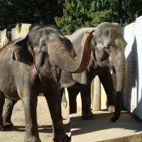 Пражский зоопарк :: Dionisio Fantozzi
