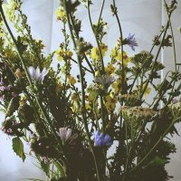 Сухоцветы :: Steranida V