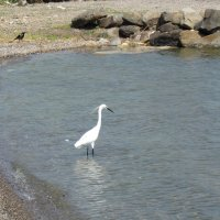 Море Галилейское :: Galina Dolkina