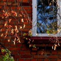 И стучится осень к нам в окно :: Юрий Морозов
