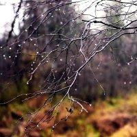 слёзы осени :: ruslic hodjaev