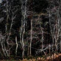умирают деревья стоя :: ruslic hodjaev