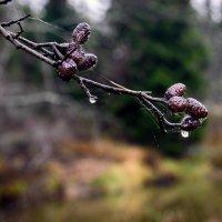 вот и осень :: ruslic hodjaev