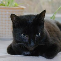 Черная кошка на светлом фоне :: Дмитрий Марков