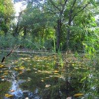 чистые пруды :: Ксения Грибанова