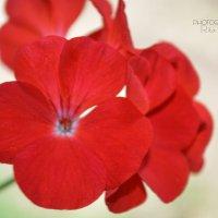 Цветы :: Рита Былина