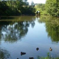 Небольшое озеро. :: НАДЕЖДА КЛАДЧИХИНА