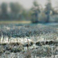 Морозное утро :: Olenka
