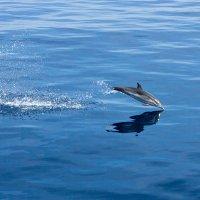 Дельфинчик :: Николай Сухоруков