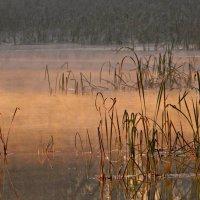 Морозное утро на озере 23 октября 2013 :: Olenka