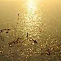 Первый лёд... золотой рассвет... :: Olenka