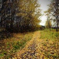 Дорожка в осень :: Юрий Митенёв