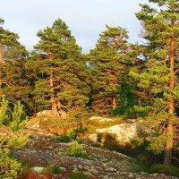 Солнечный лес :: Lena Li