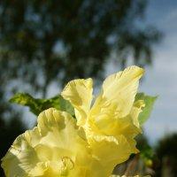 Цветы :: Олечка Исаева