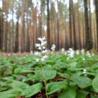 В лесу :: Наталья Варламова