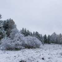 первый снег :: Denis Zakalyapin