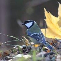 осень и синица :: Лада Котлова