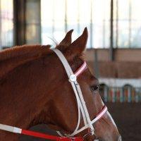 лошадь :: mob1966 Олегов