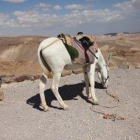 транспорт бедуина. :: gennadi ren