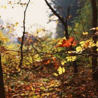 Осень в Ясной Поляне :: Юлия Морозова
