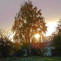 солнце взошло :: ольга хадыкина