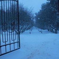 В зимнем парке... :: Nonna