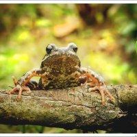 Любопытная лягушка. :: Елена Kазак