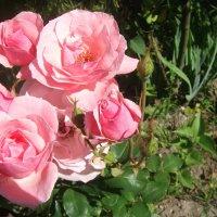 Цветы :: Виктория Козлова