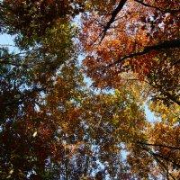 Осенний лес :: Natalia Яз