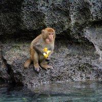 Monkey & Banana :: Igor Nekrasov