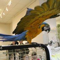 """Выставка """"о чем поют птицы?"""" :: Екатерина Криницына"""