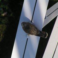 птичка :: евгений Смоленцев
