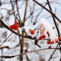 Первый снег :: Михаил Петрик