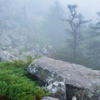 Утренний туман :: Михаил Киреев
