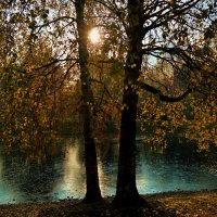 Сонце светит сквозь деревья над озером, покрытым тонкой корочкой люда... :: Irina Sergeeva