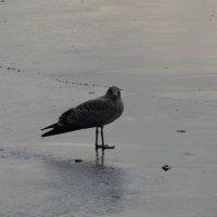 Чайка на льду :: &Любовь& &~&